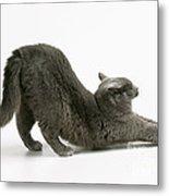 Stretching Cat Metal Print