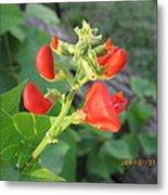 String Bean Flowers Metal Print
