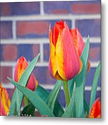 Striped Tulips Metal Print