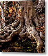 Strong Roots Metal Print by Louis Dallara