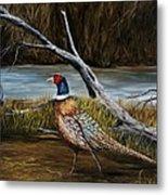 Strutting Pheasant Metal Print
