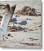 Strutting Seagull On The Beach Metal Print