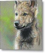 Study - Baby Wolf Metal Print