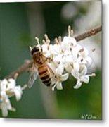 Study Of A Bee Metal Print