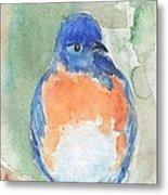 Study Of A Bluebird Metal Print