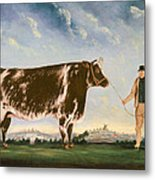 Study Of A Shorthorn Metal Print