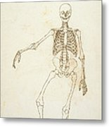Study Of The Human Figure, Anterior View, From A Comparative Anatomical Exposition Of The Structure Metal Print