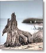 Stump Dragon Metal Print