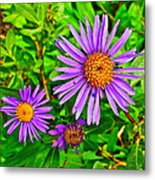 Subalpine Daisy By Vidae Falls In Crater Lake National Park-oregon  Metal Print
