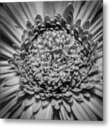 Subtle Complexity In Black And White Metal Print