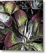 Succulent At Backbone Valley Nursery Metal Print