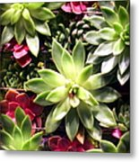 Succulent Beauties Metal Print