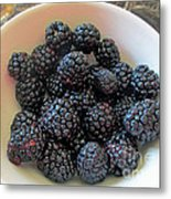 Succulent Blackberries  Metal Print
