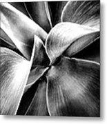 Succulent Curves  Metal Print