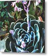 Succulent Flower Caught In A Moonbeam Metal Print