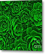 Succulent Green Metal Print