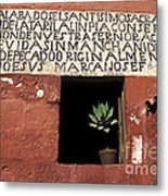 Succulent In Window Metal Print