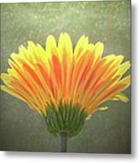 Such Joy In The Light Metal Print