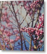 Sugar Metal Print by Laurie Search