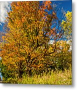 Sugar Maple 3 Metal Print