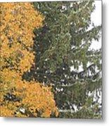 Sugar Maple And Evergreen Metal Print
