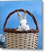 sugar the easter bunny 4 - A curious and cute white rabbit in a hand basket  Metal Print