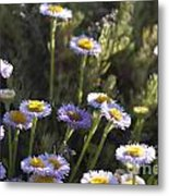 Suisun Marsh Aster In The Morning Light Metal Print by Artist and Photographer Laura Wrede