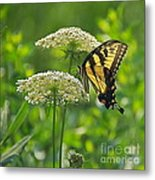 Sultry Summer Day Metal Print