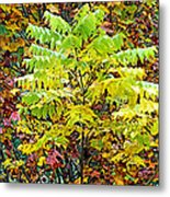 Sumac Leaves In The Fall Metal Print