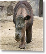 Sumatran Rhinoceros  Metal Print