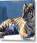 Sumatran Tiger 7d27276 Metal Print