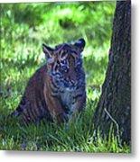 Sumatran Tiger Cub Metal Print