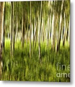Summer Aspens Metal Print
