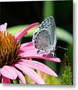 Summer Azure Metal Print