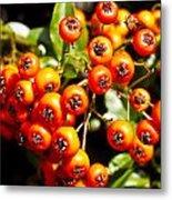 Summer Berries Metal Print