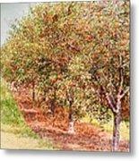 Summer Cherries Metal Print