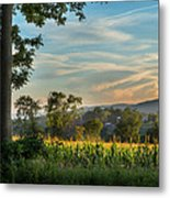 Summer Corn Square Metal Print by Bill Wakeley