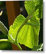 Summer Cuke Metal Print