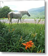 Summer Day Memories With The Paso Fino Stallion Metal Print by Patricia Keller