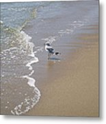 Summer Day Of A Gull 2 Metal Print