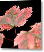 Summer Fall Metal Print