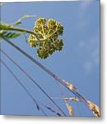 Summer Flowers And Sky Metal Print