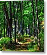Summer Forest In Ohio Metal Print