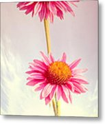 Summer Impressions Cone Flowers Metal Print