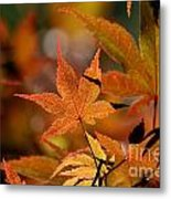 Summer Japanese Maple - 3 Metal Print