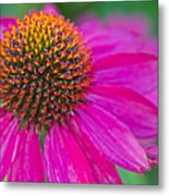 Summer Passion Metal Print
