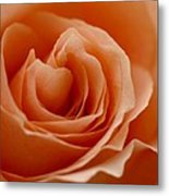 Summer Peach Metal Print