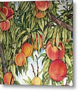Summer Peaches Metal Print by Helen Klebesadel