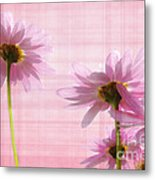 Summer Pinks Metal Print