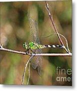 Summer Pondhawk Dragonfly Metal Print
